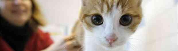 J'ai adopté un chat